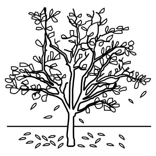 Albero autunno albero autunnale for Focos para iluminar arboles